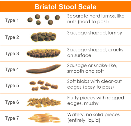 Chronic Loose Stool In Dogs Carrot Poop Or Blood Warning